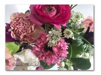 春を待つ - 雪割草 - Primula modesta -
