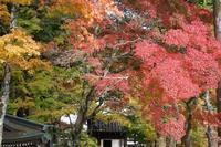 箱根発見ー神奈川発見ー2- - 想い出