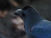 浮間公園~サンクチュアリ2/11 - 青い鳥を探して