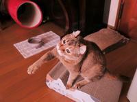 立春を過ぎた猫たち超シルバーだけど元気よ2021/2/10 Tokyo - むっちゃんの花鳥風月  ( 鳥・猫・花・空・山 )