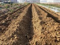 ジャガイモの植え付け準備 - 週末農夫コーディーのイケてる鍬の振るい方