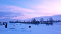 小鳥が河原に現れ始めた、春近しと思いたい2021/02/11 - 今朝の一枚 石狩川の朝