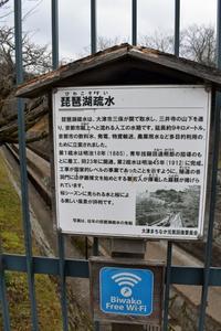 琵琶湖疎水を見る - 浜千鳥写真館