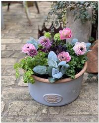 アネモネ・「アンアリス」と「カブキ」の寄せ植え - 小さな庭 2