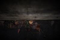 冬の色 - Photism
