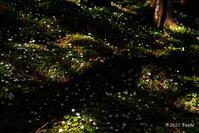 妖精の森へ1 - toshi の ならはまほろば