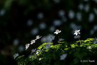 妖精の森へ2 - toshi の ならはまほろば