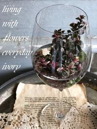 今日は祝日ですね〜♬ -  Flower and cafe 花空間 ivory (アイボリー)