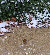 ロンドン三景ロビンと雪の結晶とスノードロップと - 期間限定 ロンドン生活 日々コレ日常