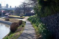 早春の花巡り水仙@伏見港 - デジタルな鍛冶屋の写真歩記