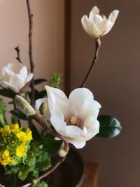 白木蓮(ハクモクレン) - 自然を見つめて自分と向き合う心の花