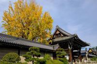 西本願寺の銀杏2020 - ぴんぼけふぉとぶろぐ2
