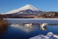 日本一の富士山 - Today's action