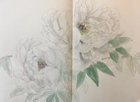 牡丹園。 - 『一日一畫』 日本画家池上紘子