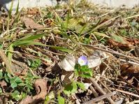2/12小さい春 - かえるネコ