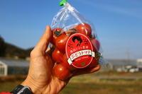 ぶどうトマト「2021」の販売をはじめます。 - 奥田トマト農園通信 (ロング版)