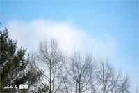「冬晴れ」 - 藍の郷