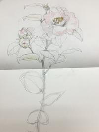 椿。天賜。 - 『一日一畫』 日本画家池上紘子