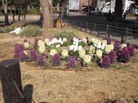 憲法便り#4446:都立戸山公園の春の花たち! - 岩田行雄の憲法便り・日刊憲法新聞