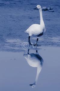 reflection - 私的な時間。