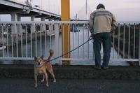 番犬 - summicron