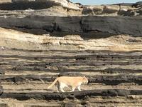 城ヶ島の猫 - 歴史と素適なおつきあい