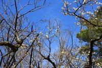光が丘公園の花 - お散歩写真     O-edo line