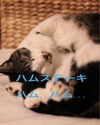 にゃんこ劇場「夢の中」 - ゆきなそう  猫とガーデニングの日記