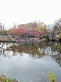 ある風景:Kikuna pond, Yokohama@Dec~Jan #1 - MusicArena