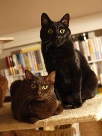 2021年2月22日猫の日ゆきねこWebニャーティー開催のお知らせ。 - ゆきねこ猫家族