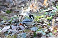 野鳥の森を歩く - 写真の記憶