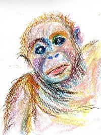 オランウータンの子供はかわいい、、 - 絵を描きながら