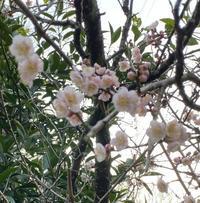 2021年2月15日今治春の花 - 好きなものに囲まれて2