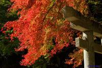 紅葉~延命寺 - katsuのヘタッピ風景
