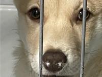 来月時間変更のお知らせ - アイマグブログ― らいおん動物病院 らいおん先生
