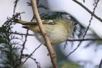 イマイチな写真もあるさ冬の鳥(あちこちの公園にて) - 旅プラスの日記