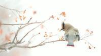 ヒレンジャク - 北の野鳥たち