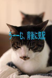 にゃんこ劇場「影法師」 - ゆきなそう  猫とガーデニングの日記