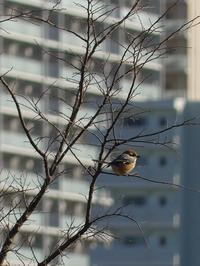 風の強い日は鳥の警戒心が強い? - 40年の徘徊blog