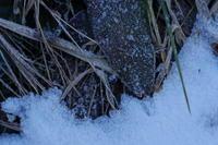 冬のあとさき - Photism