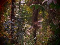 林の入口出口 - 静かに過ごす部屋