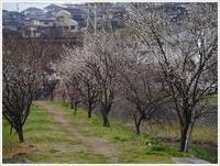 小さな春をたくさん見つけた散歩道 - さくらおばちゃんの趣味悠遊