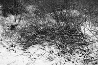 冬景色の公園を散歩する20210217 - Yoshi-A の写真の楽しみ