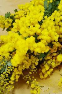 金葉アカシアとミモザのリーズ - お花に囲まれて