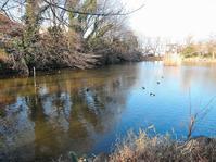 ある風景:Kikuna pond, Yokohama@Dec~Jan #3/fin - MusicArena