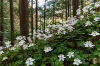 妖精たちの森(十津川村) - 花景色-K.W.C. PhotoBlog