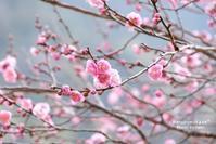 春色のはじまり2 - haruironokaze*