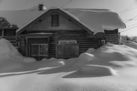 雪に佇む - SCENE