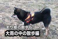 黒柴まりのブログ2月17日編 - 日本あちこち撮り歩記