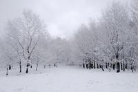 雪景色 - Capu-photo Digital photographic Laboratory